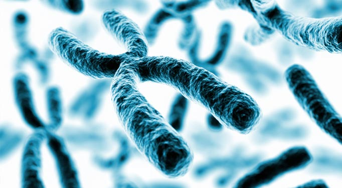 Cellular aging by shortened telomeres