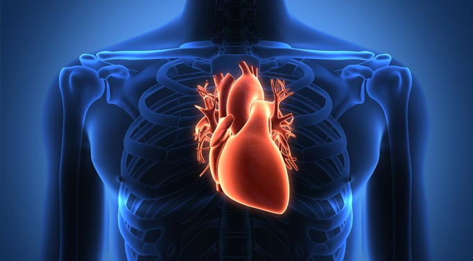 Elevated homocysteine and the heart