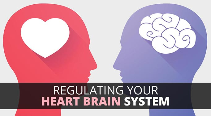The Heart Brain System - Part 3