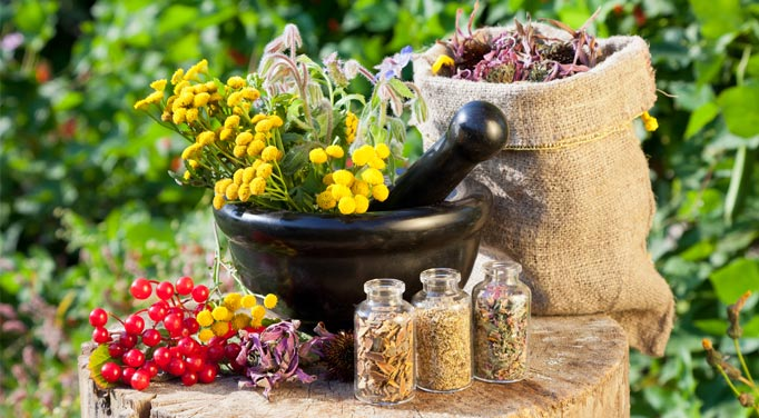 Herbs and health benefit your body