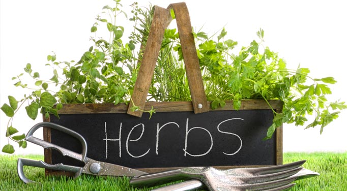Some common unprocessed herbs for Adrenal Fatigue