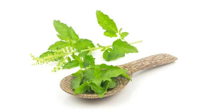 This plant helps promote Holy basil cortisol benefits.