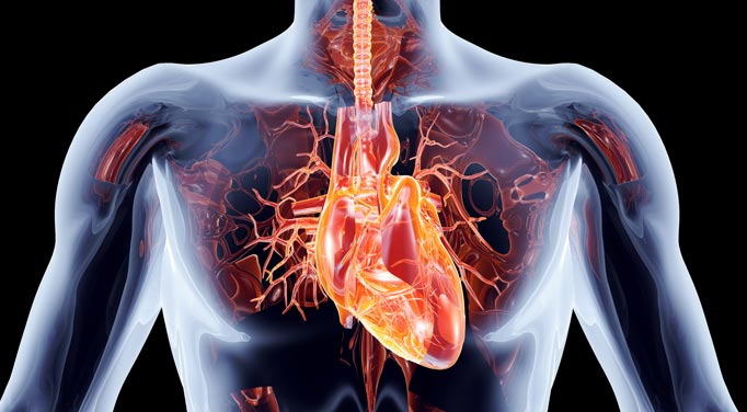 If not properly taken care of, infectious heart disease can cause a heart attack.