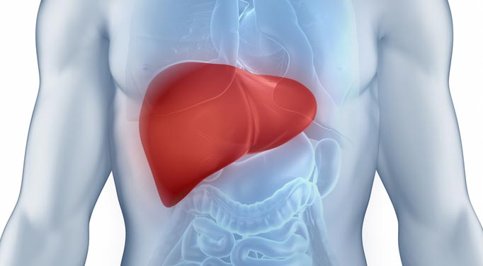 Liver Enhancing Foods can help you adrenal fatigue by enhancing the detoxification process