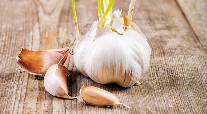 Garlic has many benefits such as natural blood pressure medicine
