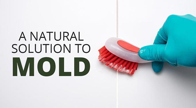 Natural mold removal