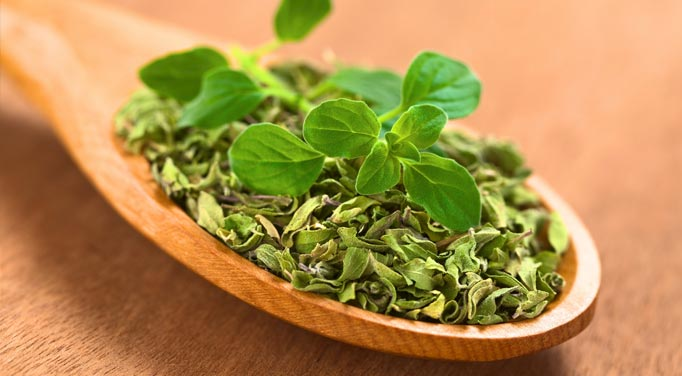A wooden spoon with both dried and fresh oregano leaves, one way to use oregano for oregano health benefits