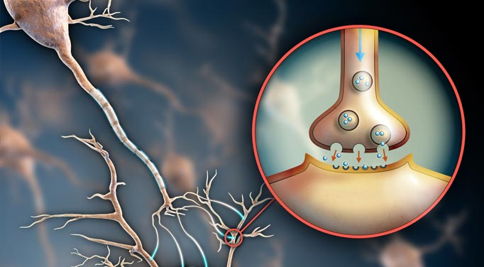 An illustration of a receptor site