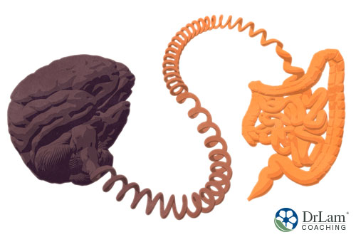 An image of a brain and intestinal tract connected by a curly phone cord