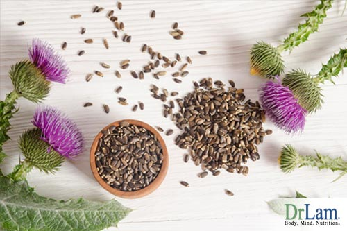 Sprigs of milk thistle and its seeds, a potent example of liver cleansing herbs