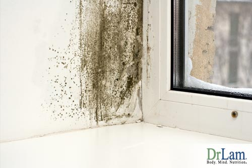 Mold Toxicity Symptoms Can Be Caused By House Hold