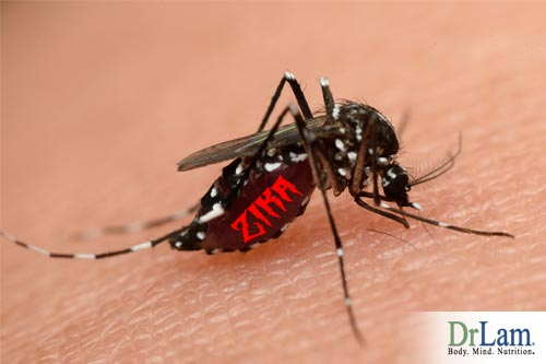 Mosquito bites are the largest vector for infection, learn Zika virus facts