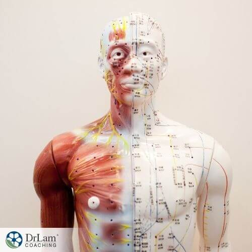 An image of a human mannequin with the acupuncture points mapped out