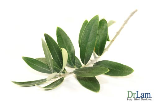 Olive Leaf and Cancer treatment