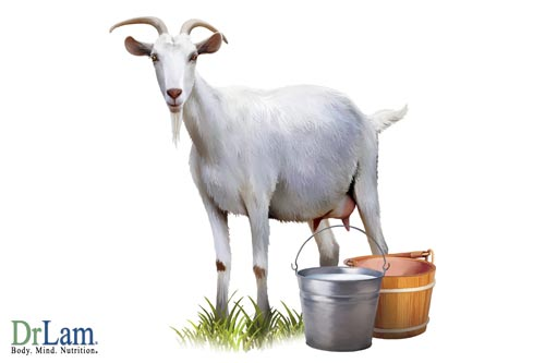 There are many different vitamins that contribute to goat's milk soap benefits