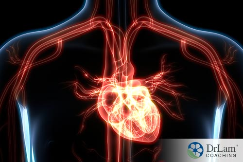 An image of the human heart