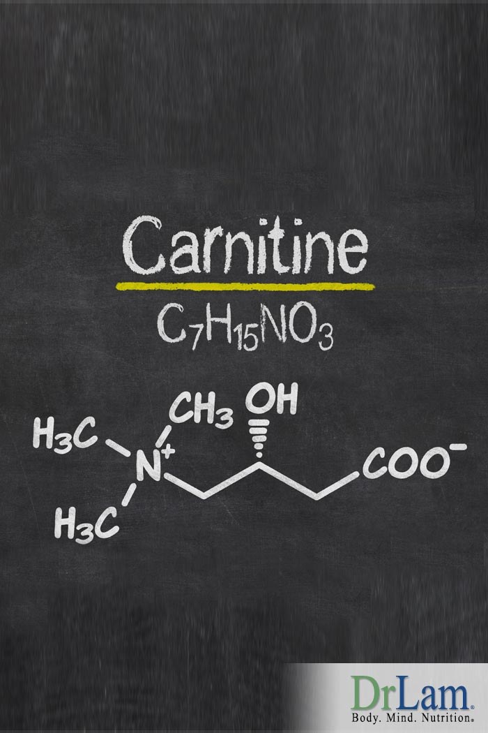 Carnitine vs Acetyl Carnitine: What is the Big Difference?