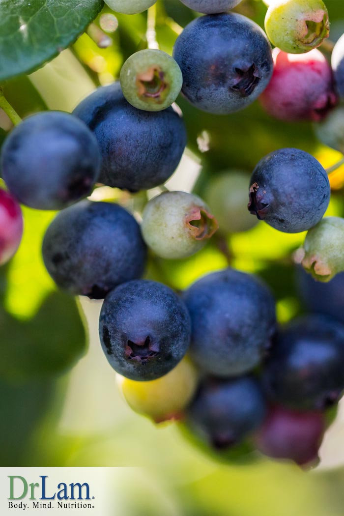 Pterostilbene Shows Promise for Treating Obesity and Fatigue