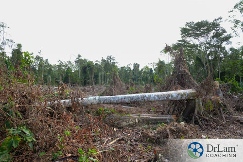 Image of the Amazon forest being destroyed