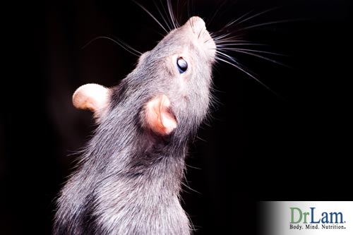 Rodents helped spread plague disease in the 14th century