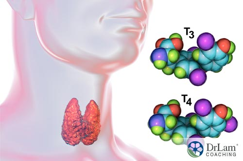 The hormone circuit and thyroid hormones