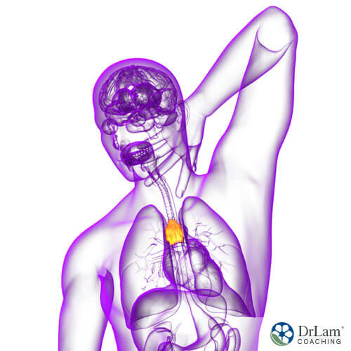 The Mystery of The Thymus Gland