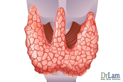 Thyroid glands, what does the adrenal gland do that affects them?