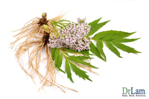 The general calming effect of using valerian root for anxiety soothes many of the unpleasant symptoms of chronic stress and Adrenal Fatigue.