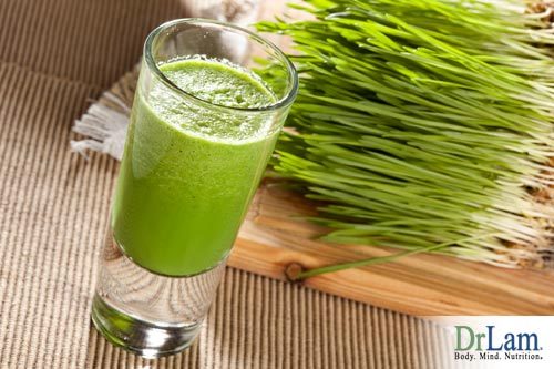 A great alternative to sprouted wheat is wheatgrass